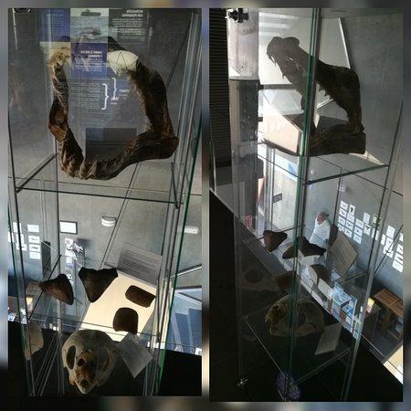 Centro de Interpretacion de Cetaceos y Aula del Mar