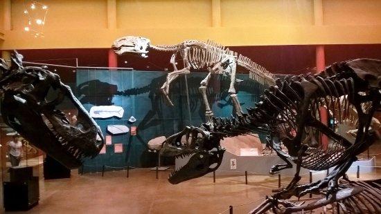 Delicias, Mexico: Sala 4 - Dinosaurios, la preferida de los chicos!