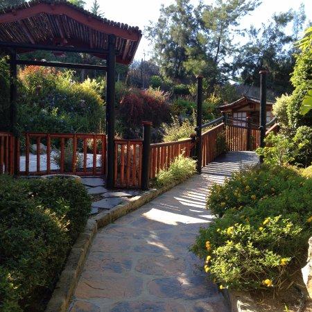 Bassin photo de jardin botanico molino de inca for Jardin botanico torremolinos