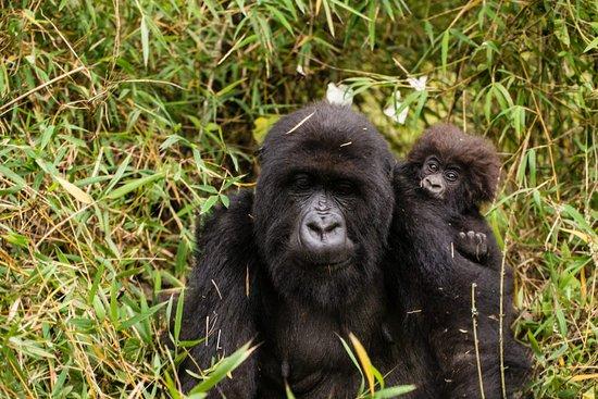 Marlene Africa Safaris