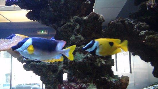 Hotel Oceania Saint Malo : l'aquarium