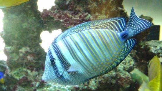 Hotel Oceania Saint Malo : aquarium