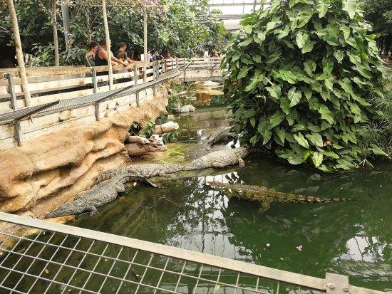 Pierrelatte, Frankrike: La ferme au croco