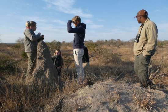 Timbavati Private Nature Reserve, Sudáfrica: We had a special interest in termite mounds, Sophia told us all about them...