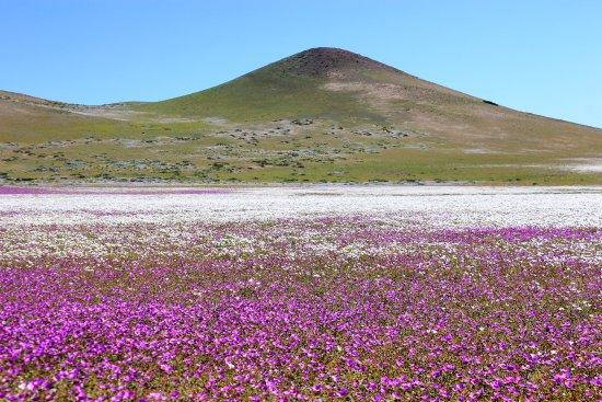 GeoTurismo Chile