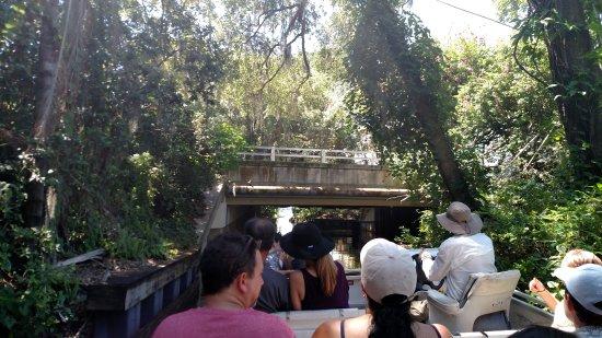 Winter Park, FL: Low Bridge....Quack !!