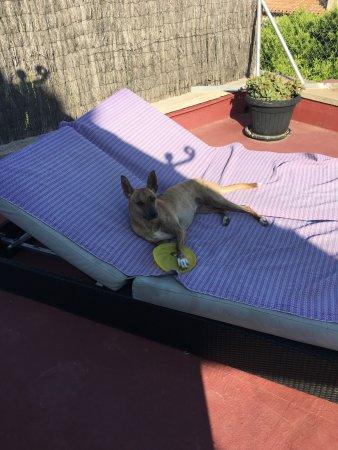 Hotel Los Globos: Unser Hund auf der Sommerliege! ;-)