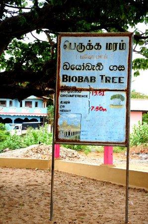 Mannar, سريلانكا: DSC_8020_large.jpg
