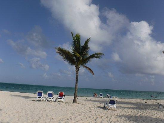 Beach bild von reef oasis dive club freeport tripadvisor - Reef oasis dive club ...