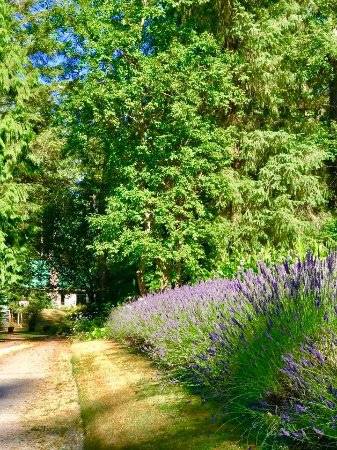 Woodinville, WA: Lavender Entrance to Auberge de Seattle