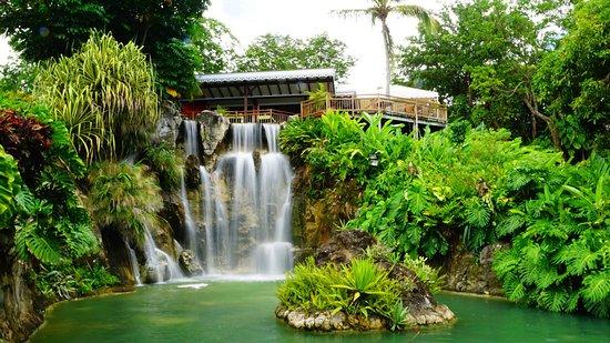 Deshaies, Guadeloupe: photo8.jpg