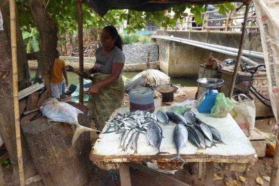 Wattala, Σρι Λάνκα: Lokale vismarkt Ngombo