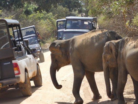 Tissamaharama, Sri Lanka: Close to the jeeps