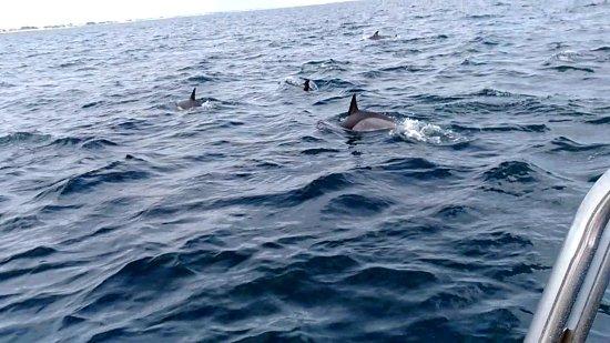 Guidel-Plage, Francúzsko: dauphins entre île de groix guidel