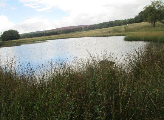 Peak District National Park, UK: Longshaw Estate