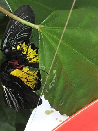 Cambridge, Canada: Moth with beautiful colours