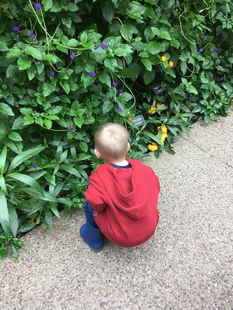 เคมบริดจ์, แคนาดา: Grandson marveling at the many butterflies in the greenery