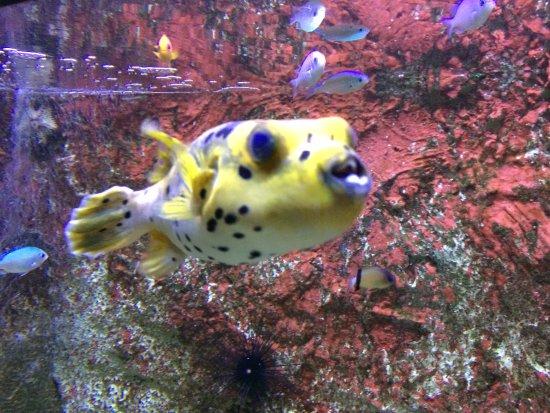 Etrange poisson picture of l 39 aquarium du roc granville - Poisson shark aquarium ...