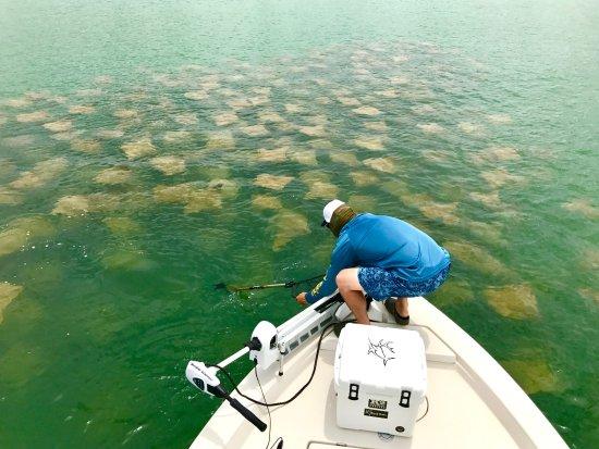 Boca Grande, FL: Summertime Ray Migration