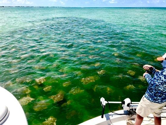Boca Grande, FL: Super Fun Fishing Monster Rays