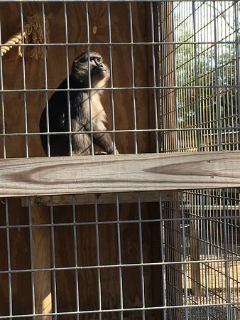 Luray Zoo - A Rescue Zoo: photo9.jpg