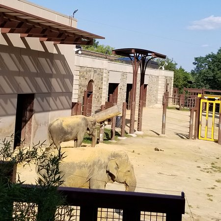 Omni Shoreham Hotel: National Zoo is 3 blocks away