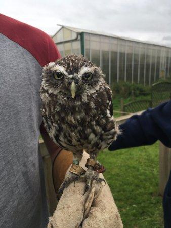 Congresbury, UK: Littel Owl