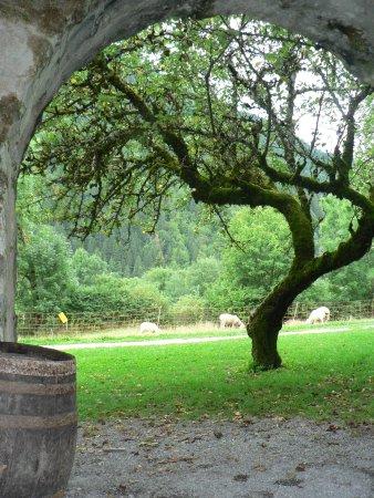 Saint Jean d'Aulps, Frankrike: Les caves