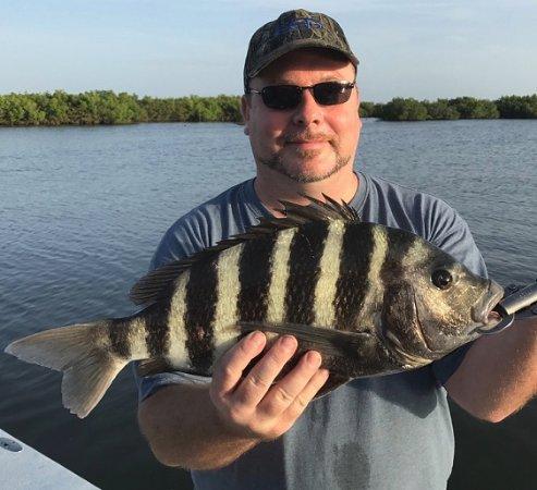 Edgewater, FL: Sheepshead