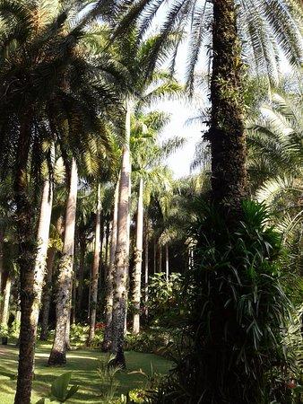 Inhotim: Jardins maravilhosos