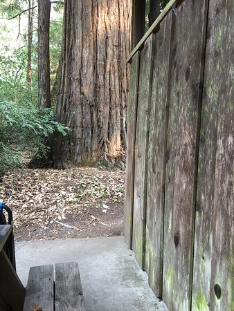 Leggett, Καλιφόρνια: Deer's Haven was so peaceful and relaxing. We loved our cabin in the redwoods. The staff is so n