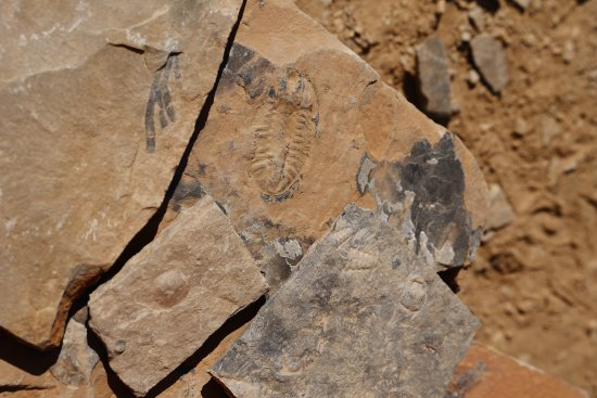 Field, Canada: Fossils at the quarry site