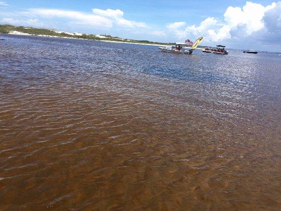 Shell Island Blue Dolphin Tours Tea Brown Snorkel Spot We Were Taken Into