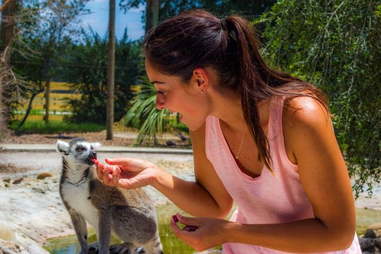 Lakeland, FL: You won't want to miss hand-feeding our lemurs!