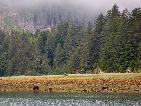 Grizzly Bear with Sea Wolf Adventures, Port McNeill, B.C. Canada