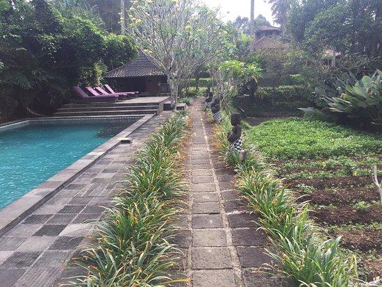 Kampoeng Padi Boutique Villa: photo0.jpg