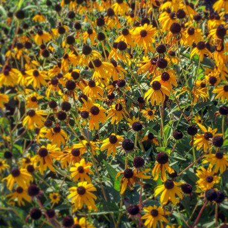The Arboretum: photo1.jpg