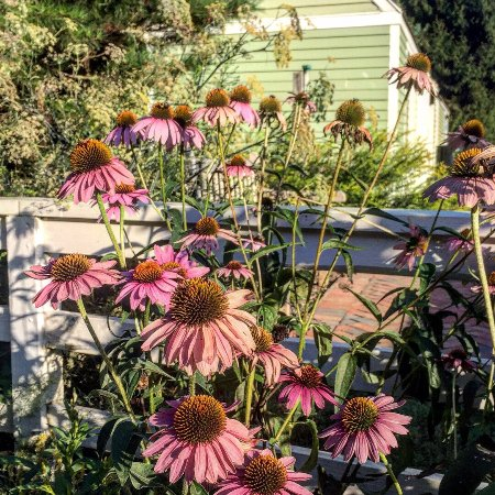 The Arboretum: photo2.jpg