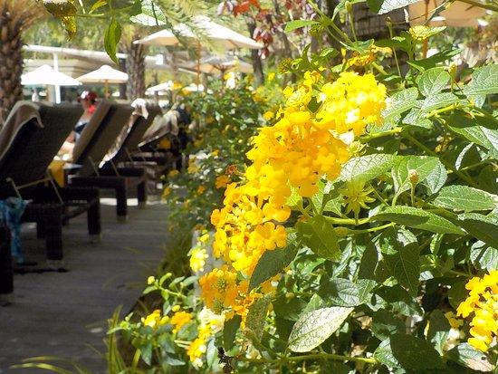 Padma Resort Legian: プールサイド