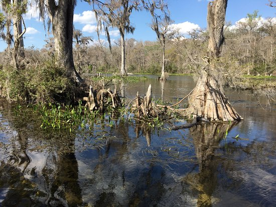 Edward Ball Wakulla Springs State Park: Start counting how many alligators you'll see....
