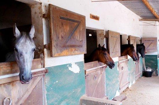 Équitation à la plage à Carthagène