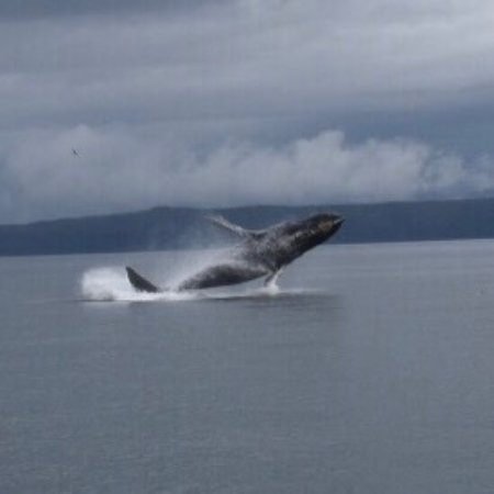 Cross Sound Express Whale Watching : photo0.jpg
