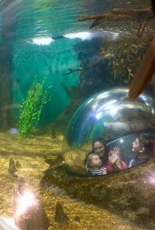 Union City, TN: they have aquariums