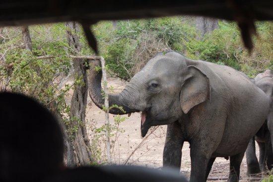 Матара, Шри-Ланка: Yalla national park