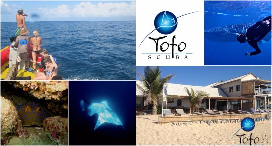 Collage of Tofo Scuba; the shop front, ocean safari and diving trips.