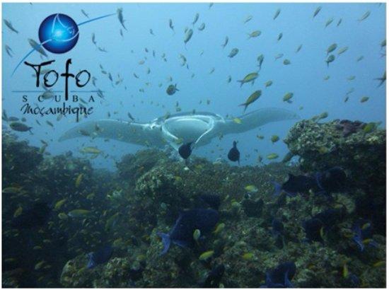 Tofo, Mozambik: Reef Manta on Manta Reef
