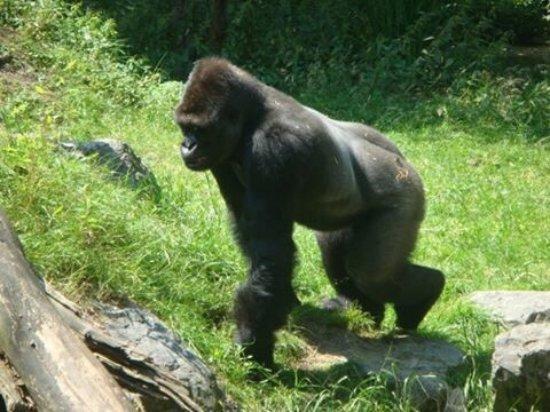 Zoo Duisburg : photo3.jpg
