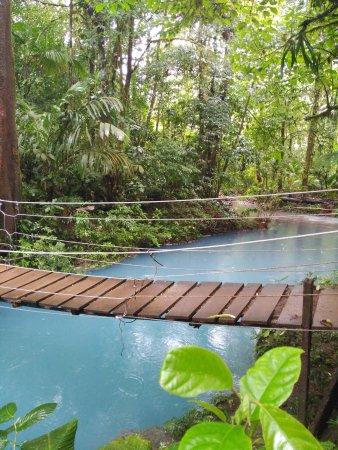 Tenorio Volcano National Park, Costa Rica: Puente colgante sobre el Río Celeste
