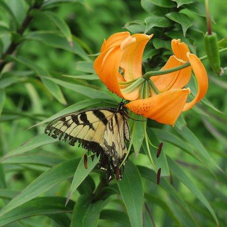 Matthaei Botanical Gardens: In the perennial garden