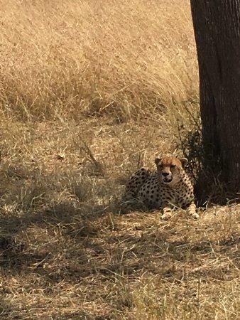 Sayari Camp, Asilia Africa: a rest after lunch